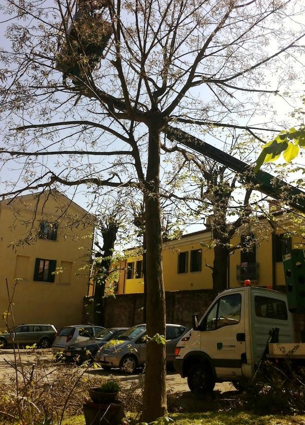 Potature alberi esiepi
